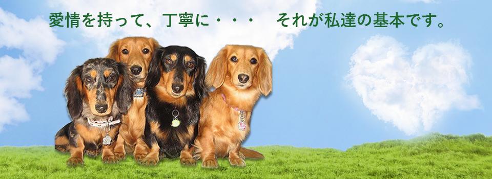 ペットホテル・引越し・輸送・タクシーなら大阪伊丹空港近く「DOG HAIR STUDIO KEN」